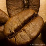 Auf den Spuren der Kaffee Entdeckung