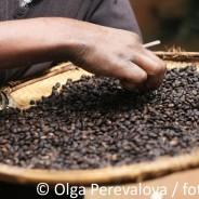 Bohnen statt Pulver: So wird der kaffee richtig köstlich